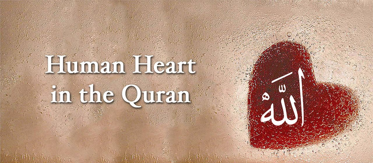 The human heart is mentioned many times in the Qur'an | Jannat Al Quran