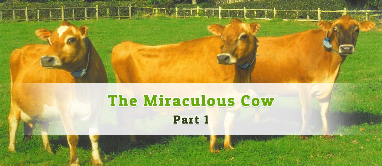 The Miraculous Cow Part 1 | Jannat Al Quran